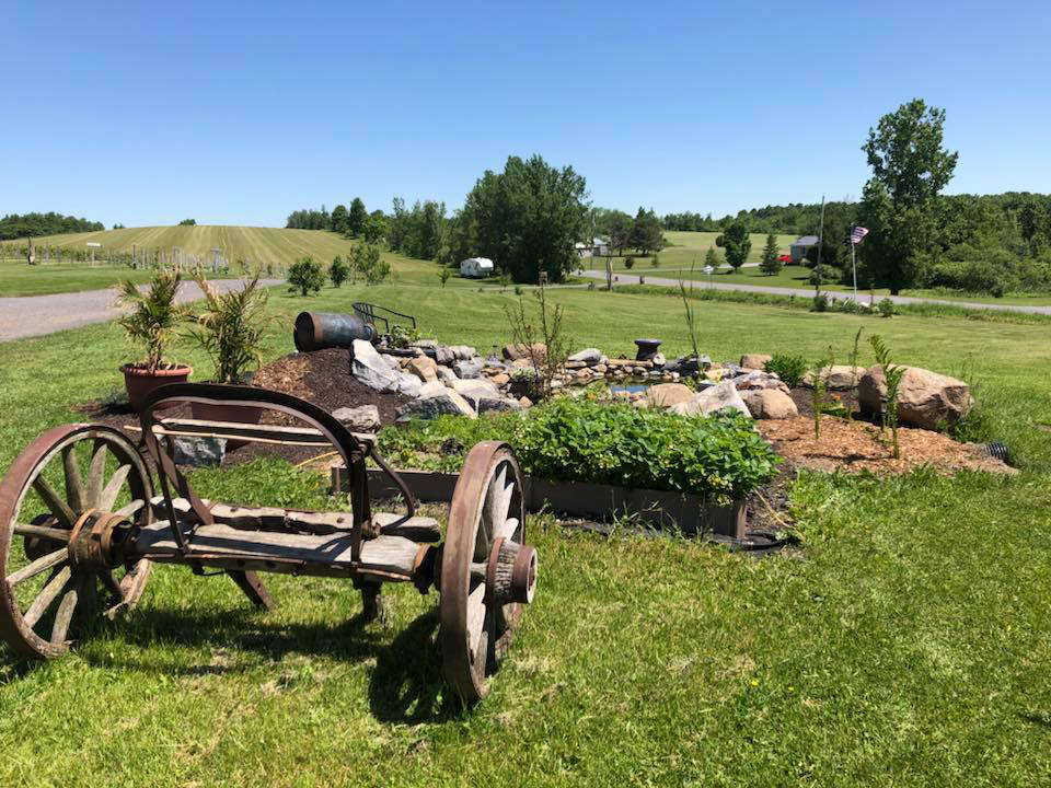vineyards big field with old wooden cart busted grapes winery black river new york united states ulocal local products local purchase local produce locavore tourist