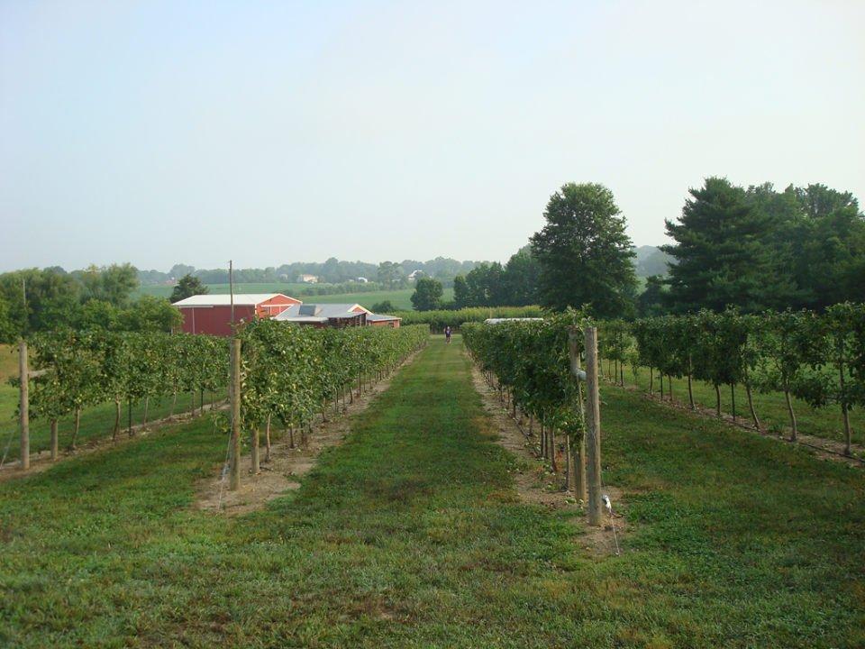 vignoble grand champs de vigne avec la ferme rouge au loin chestnut run farm artisan winery pilesgrove new jersey états unis ulocal produits locaux achat local produits du terroir locavore touriste