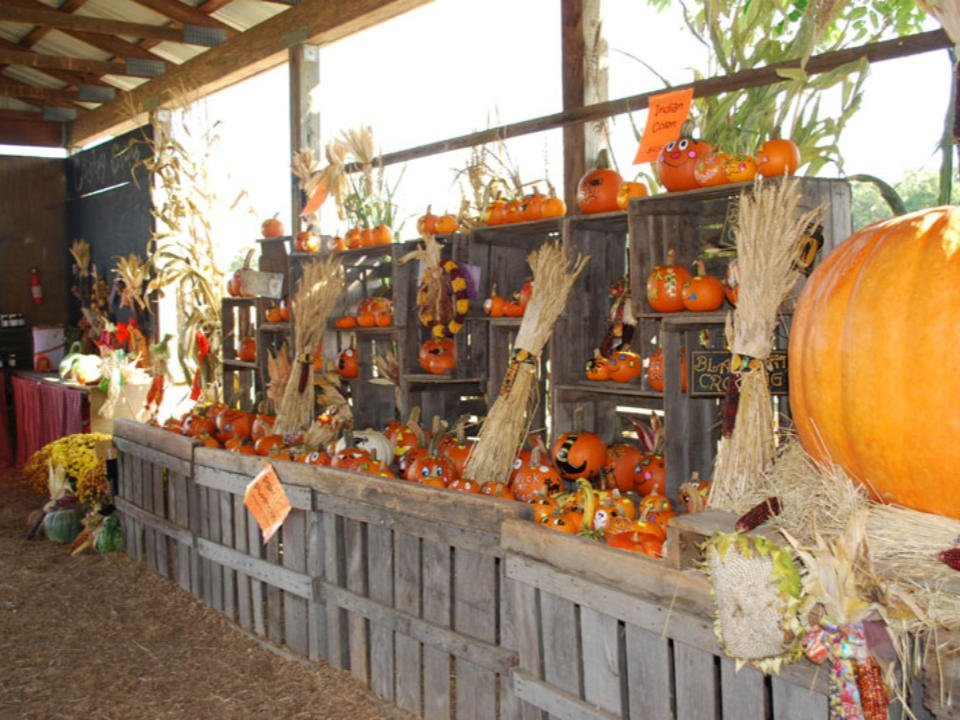 produce picking interior of the shop with a wall of pumpkins conklin farm u-pick montville new jersey united states ulocal local products local purchase local produce locavore tourist