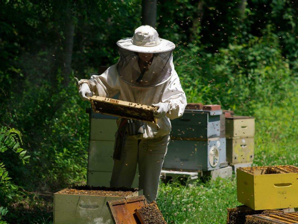 apiculteur récolte du miel dans les ruches avec les abeilles qui tournent autour e and m gold beekeepers tinton falls new jersey united states ulocal produits locaux achat local produits du terroir locavore touriste