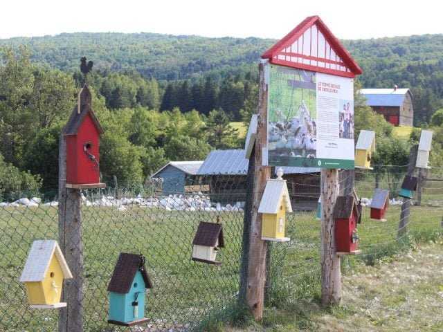 food stores interpretation board and fence with colorful bird huts and duck in the paddock and the farm la ferme basque de charlevoix saint-urbain quebec canada ulocal local products local purchase local produce locavore tourist