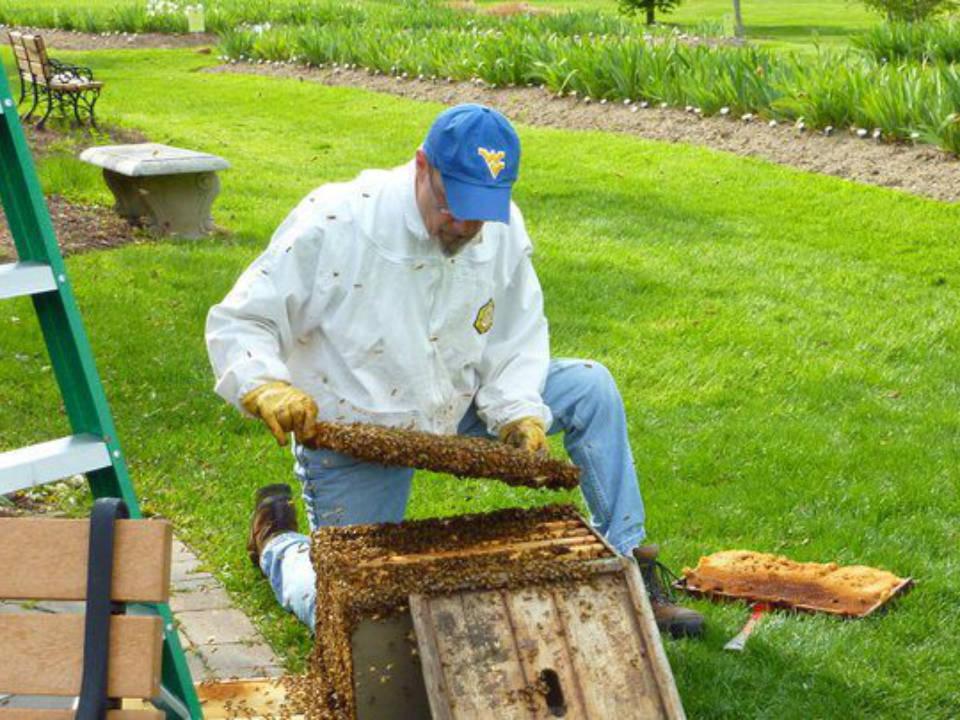 apiculteur homme inspectant les cadres et nettoie les cellules essaim d'abeilles hilltop honey north caldwell new jersey united states ulocal produits locaux achat local produits du terroir locavore touriste