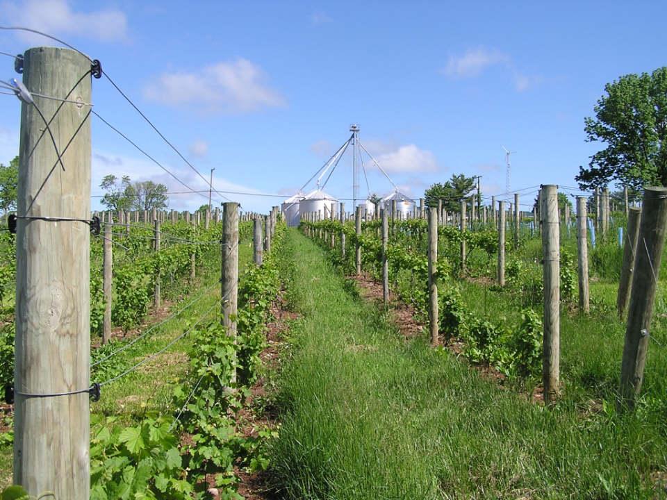 vignoble vue des vignes mount salem vineyards pittstown new jersey états unis ulocal produits locaux achat local produits du terroir locavore touriste