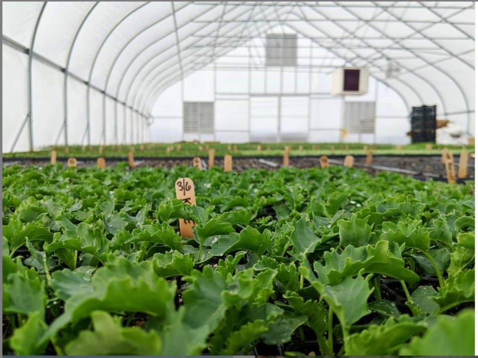 marché de fruits et/ou légumes serre remplie de légumes mx morningstar farm hudson new york états unis ulocal produits locaux achat local produits du terroir locavore touriste