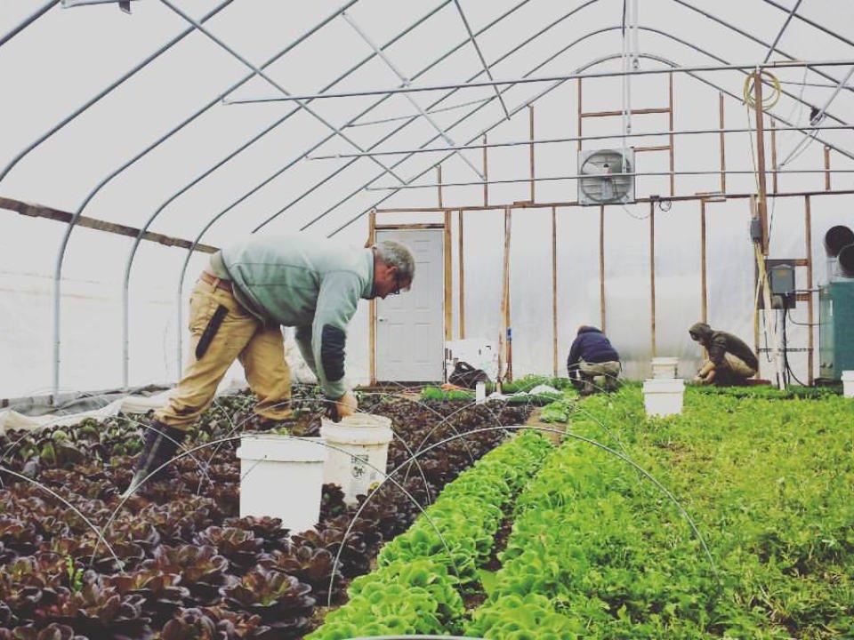 marché de fruits et/ou légumes serre remplie de légumes avec employés à l'intérieur mx morningstar farm hudson new york états unis ulocal produits locaux achat local produits du terroir locavore touriste