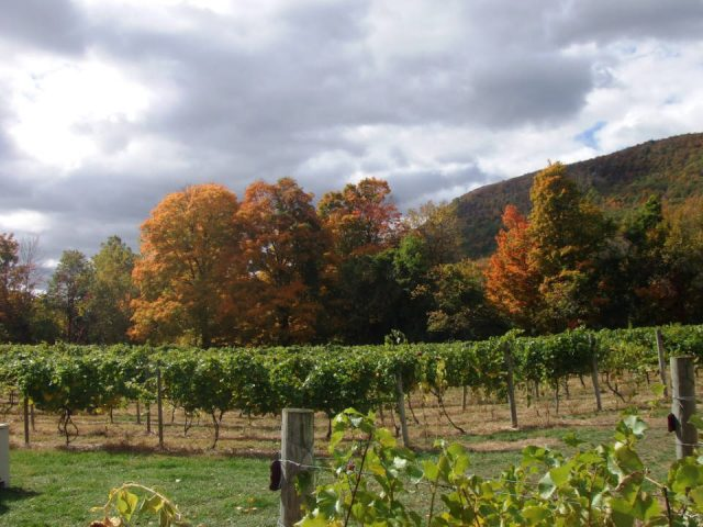 vineyards view of the vineyard in autumn palaia winery and meadery highland mills new york united states ulocal local products local purchase local produce locavore tourist