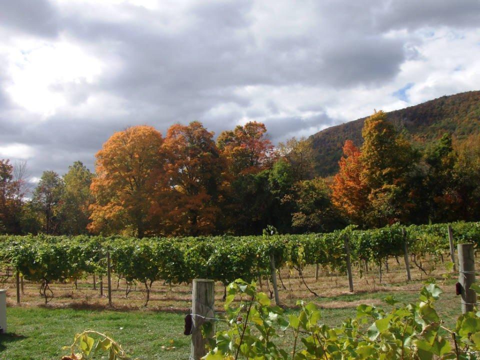 vignoble vue du vignoble en automne palaia winery and meadery highland mills new york états unis ulocal produits locaux achat local produits du terroir locavore touriste