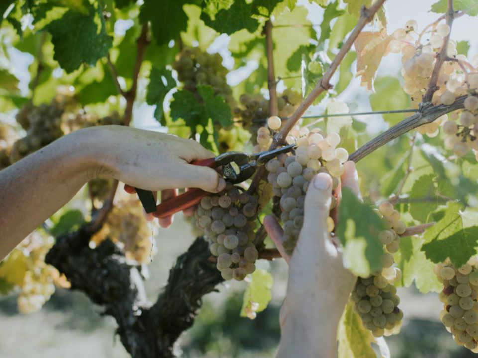 Vignoble alcool alimentation Rowlee Wines & Vineyard Nashdale Nouvelle-Galles du Sud Australie Ulocal produit local achat local