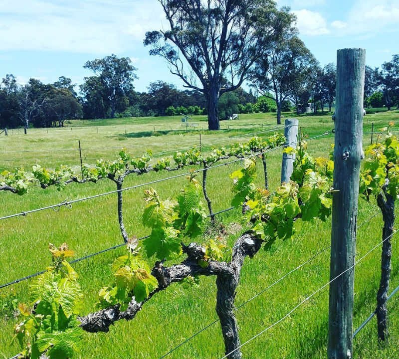 Vineyard Alcohol Supply SHORT SHEEP Micro-Winery Buckaroo NSW Australia Ulocal Local Product Local Purchase