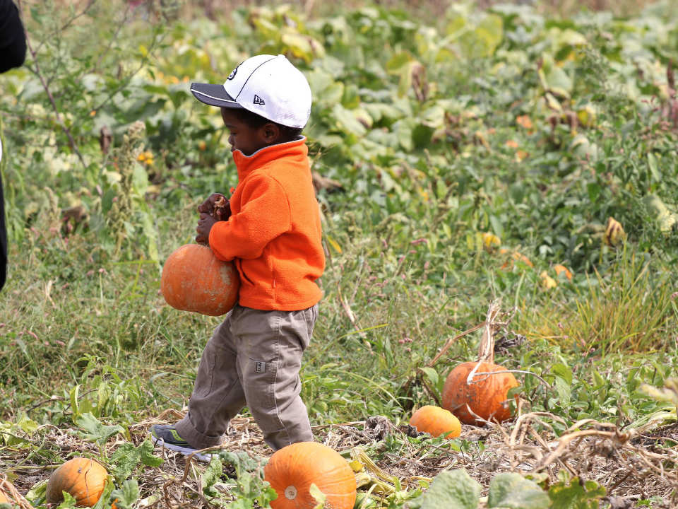 produce picking pumpkin harvest boy picking a pumpkin terhune orchards pick your own princeton new jersey united states ulocal local products local purchase local produce locavore tourist