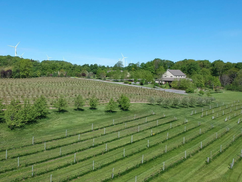 vineyards aerial view of the farm and winery tug hill vineyards lowville new york united states ulocal local products local purchase local produce locavore tourist