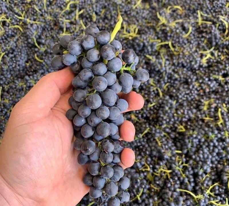 Vineyard Liquor Supply Tyrrell's Wines Polkobin Hunter Valley Australia Ulocal Local Product Local Purchase