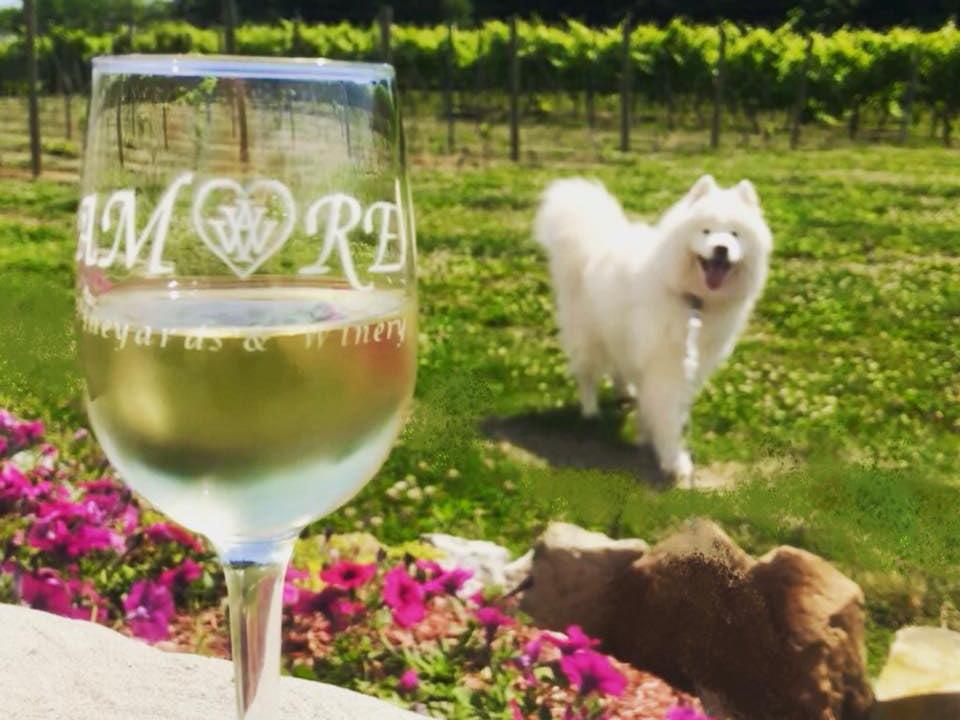 vignoble verre de vin blanc sur une table devant les vignes avec magnifique chien blanc amore vineyards and winery nazareth pennsylvanie états unis ulocal produits locaux achat local produits du terroir locavore touriste