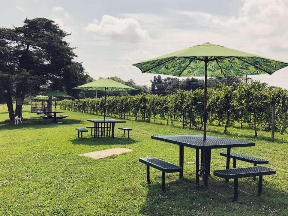 vignoble ensembles de tables avec parasols installés sur le terrain près des vignes en été buckingham valley vineyards buckingham pennsylvanie états unis ulocal produits locaux achat local produits du terroir locavore touriste