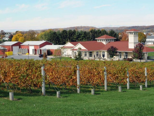 vineyards beautiful estate with white house californian style and vines in autumn clover hill vineyards and winery breinigsville pennsylvania united states ulocal local products local purchase local produce locavore tourist