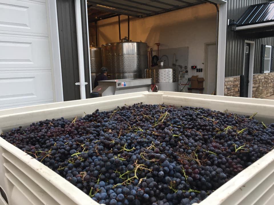 vignoble grand bac avec raisins bleus dedans et usine de production en arrière plan colloca estate winery sterling new york états unis ulocal produits locaux achat local produits du terroir locavore touriste