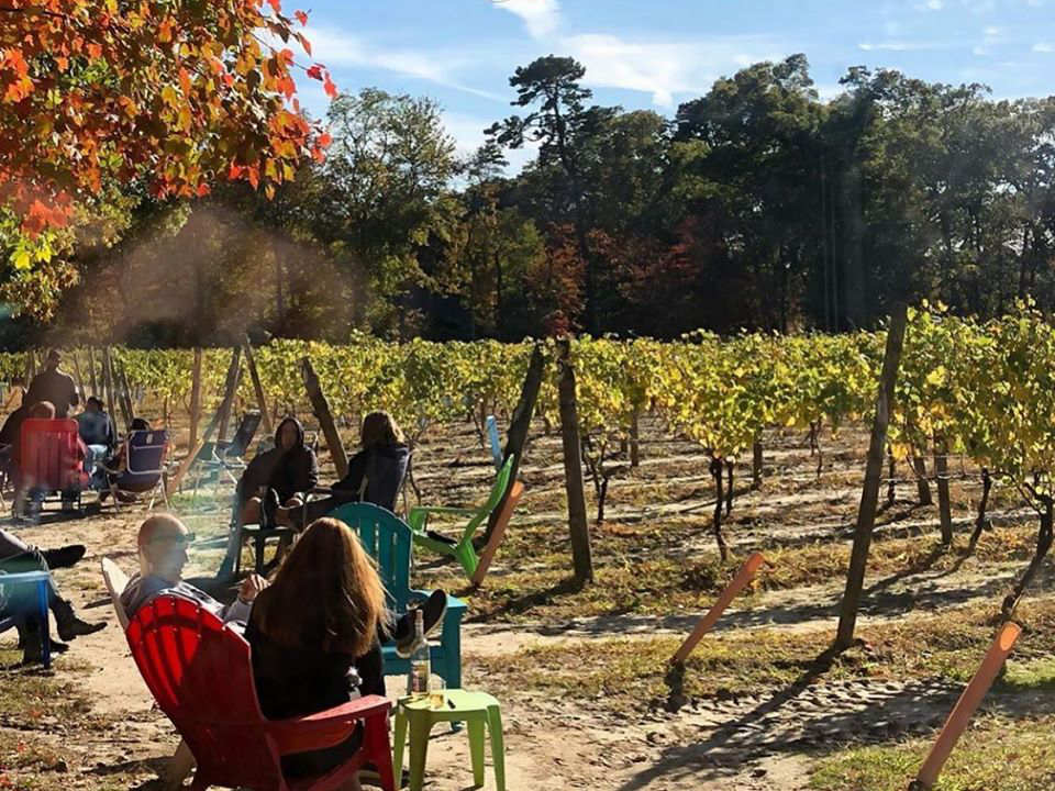 vineyards people sitting in the vineyards enjoying the autumn sun loughlin vineyard sayville new york united states ulocal local products local purchase local produce locavore tourist