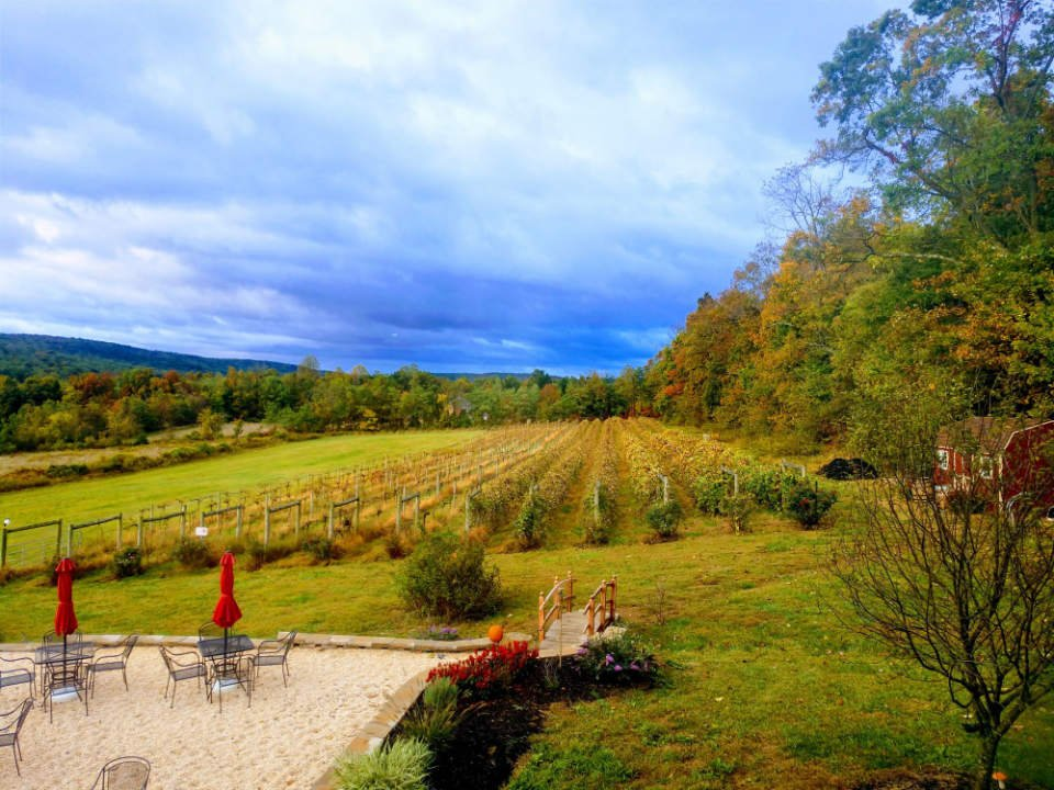 vineyards magnificent view of the field and part of the terrace in a fall scenery red heifer winery smithsburg maryland united states ulocal local products local purchase local produce locavore tourist