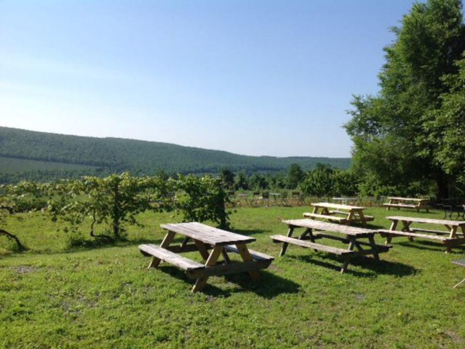 vineyards beautiful estate with picnic tables reids orchard and winery orrtanna pennsylvania united states ulocal local products local purchase local produce locavore tourist