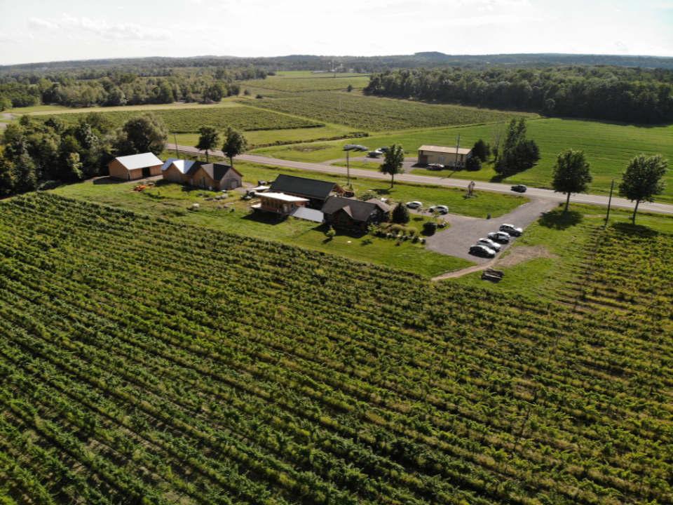 vignoble magnifique domaine avec les établissements vinicoles et les vignes shaw vineyard dundee new york états unis ulocal produits locaux achat local produits du terroir locavore touriste