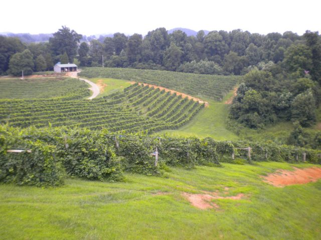 vineyards large estate with vineyards abingdon vineyard and winery abingdon virginia united states ulocal local products local purchase local produce locavore tourist