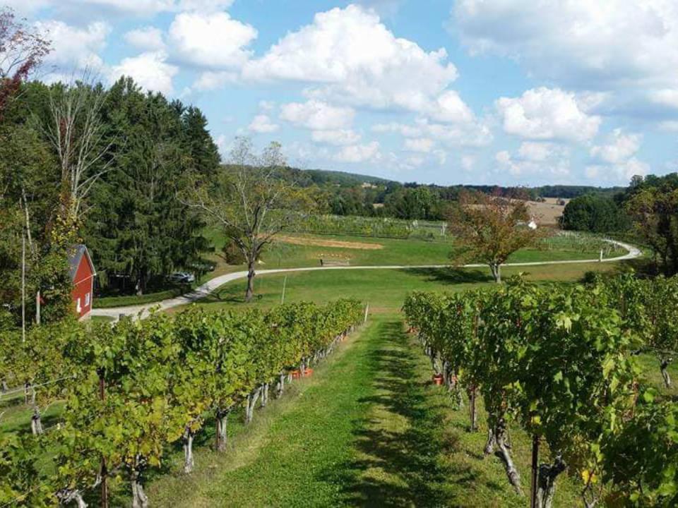 vignoble chemin et maison rouge avec champ de vignes balla cloiche vineyards stewartstown pennsylvanie états unis ulocal produits locaux achat local produits du terroir locavore touriste