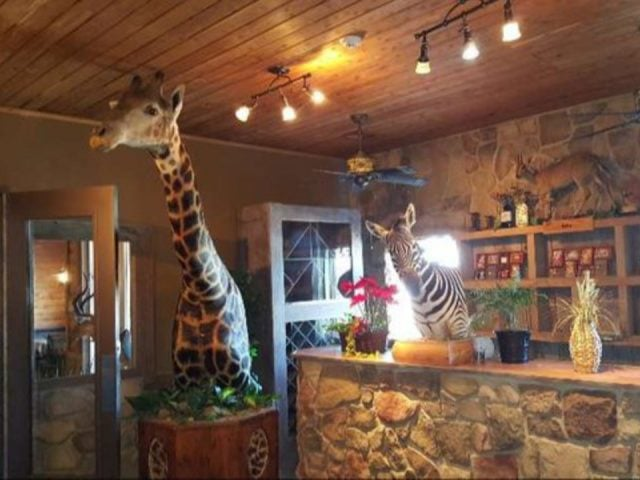 vineyards vineyard reception desk made of field stones with giraffe and zebra safari animals bretz wildlife lodge and winery carlyle illinois united states ulocal local products local purchase local produce locavore tourist