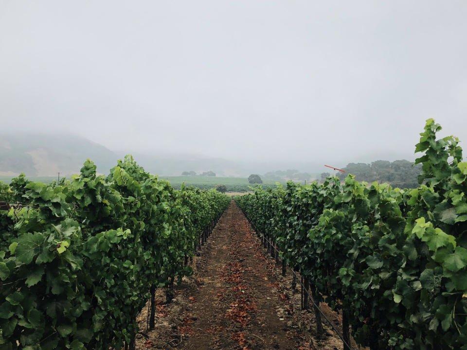 vignoble alcool pali wine co anaheim californie ulocal produit local achat local