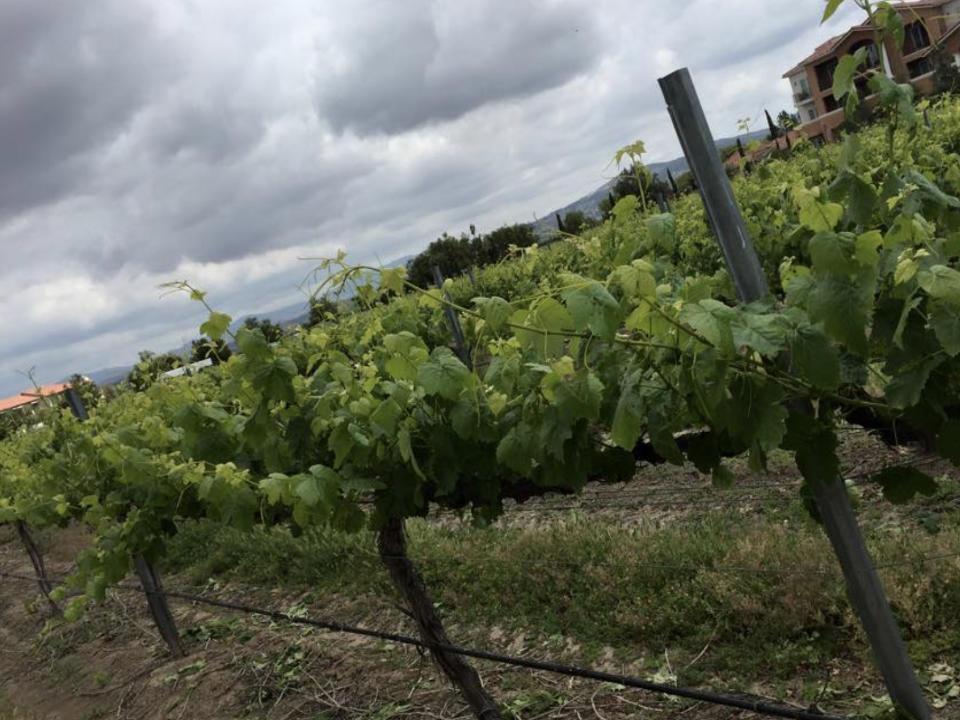 vignoble alcool san pasqual winery la mesa californie ulocal produit local achat local