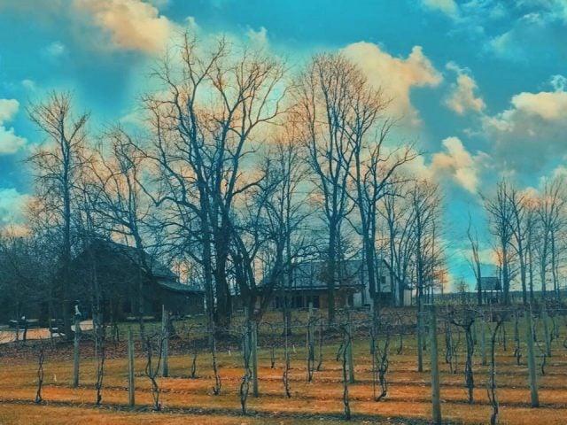 vignoble domaine avec vignes en automne avec établissement vinicole et vieille grange sleepy creek vineyards fairmount illinois états unis ulocal produits locaux achat local produits du terroir locavore touriste