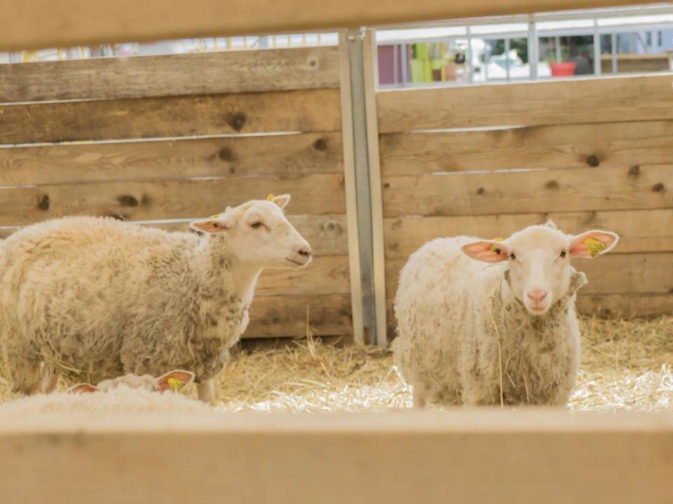 alimentation vente de viandes agneaux de laval laval quebec ulocal produit local achat local