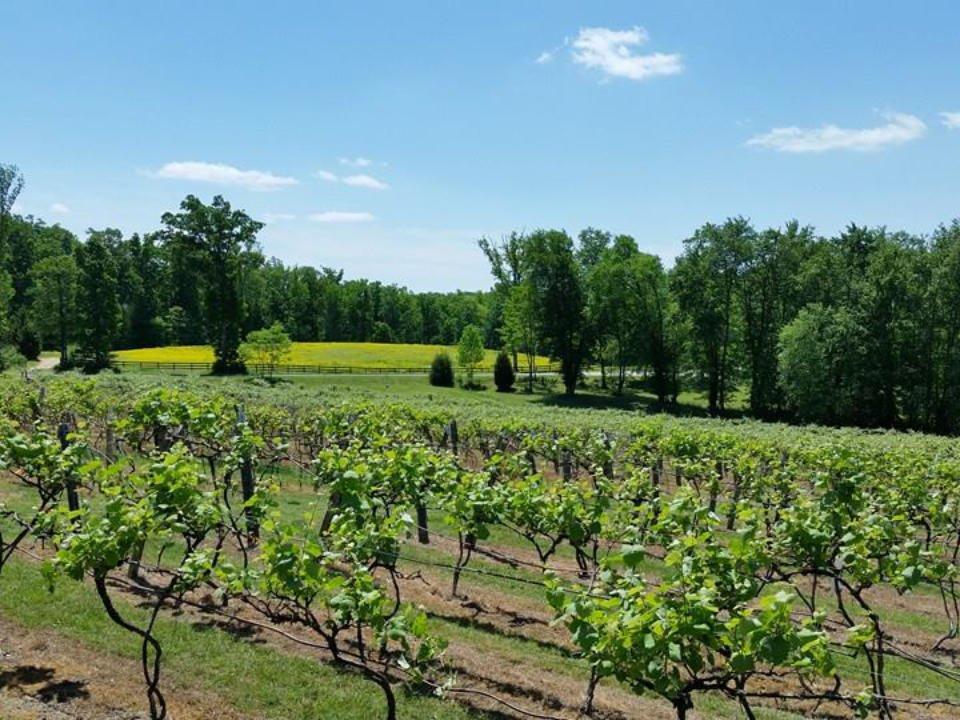 vignoble grand domaine avec vignes et forêt byrd cellars goochland virginie états unis ulocal produits locaux achat local produits du terroir locavore touriste