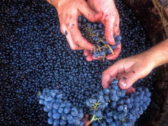 Vignoble alcool alimentation Piombaia Cantina Sienne Italie Ulocal produit local achat local