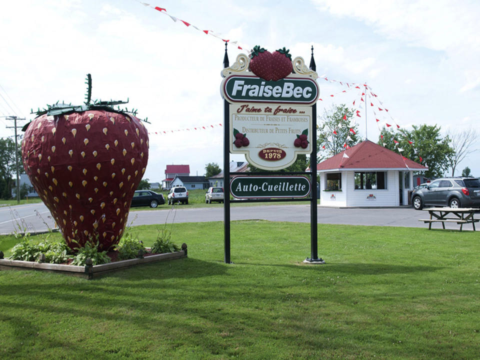 food family farmers produce picking fraisebec sainte anne des plaines quebec ulocal local product local purchase