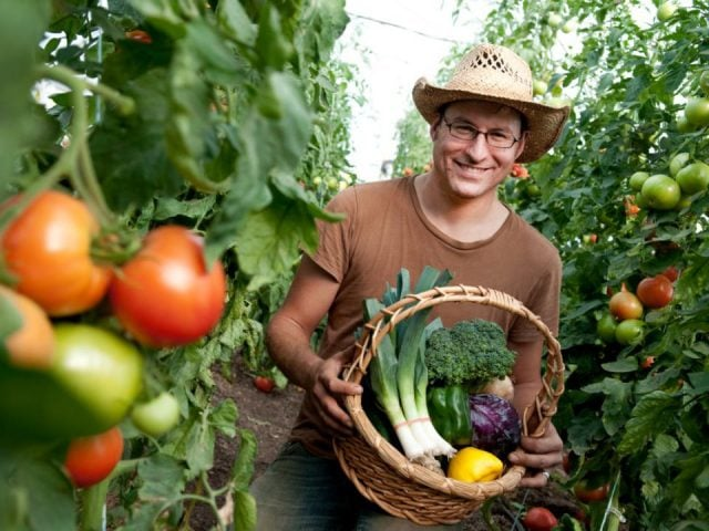 produce picking owner of his garden surrounded by shots of tomatoes and basket of vegetables in his hands notre petite ferme thurso quebec canada ulocal local products local purchase local produce locavore tourist