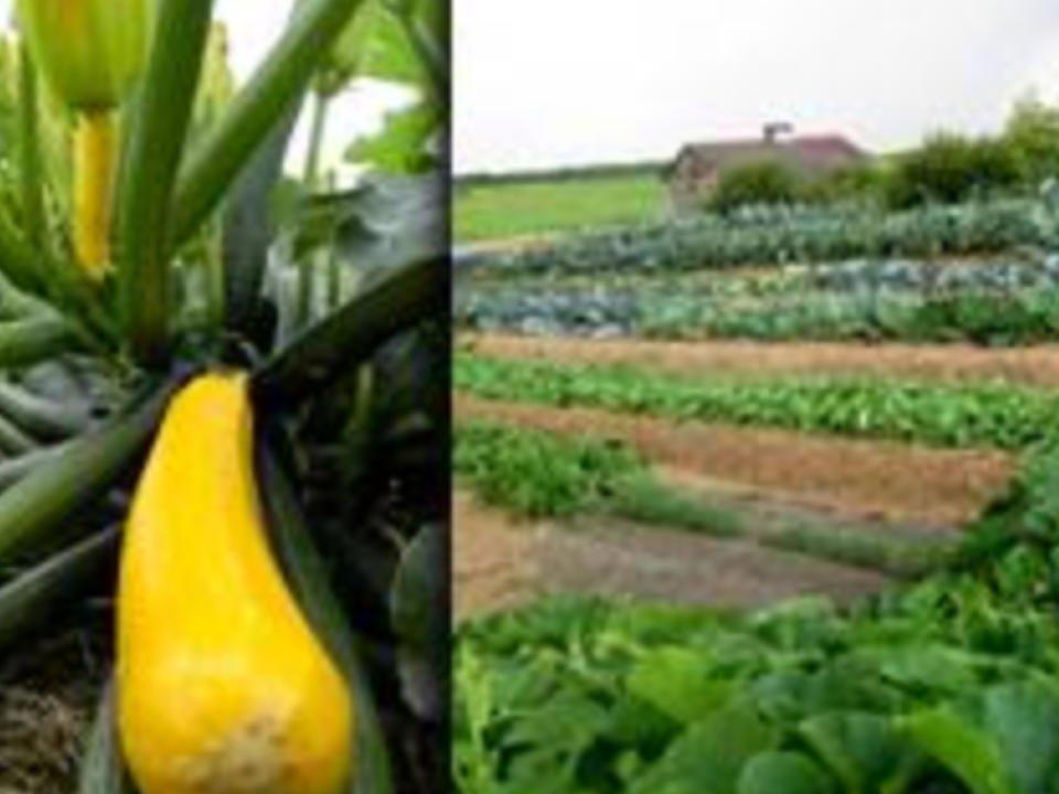 fruits et légumes écologique Panier-santé Abitibi Roquemaure Québec Ulocal produit local achat local