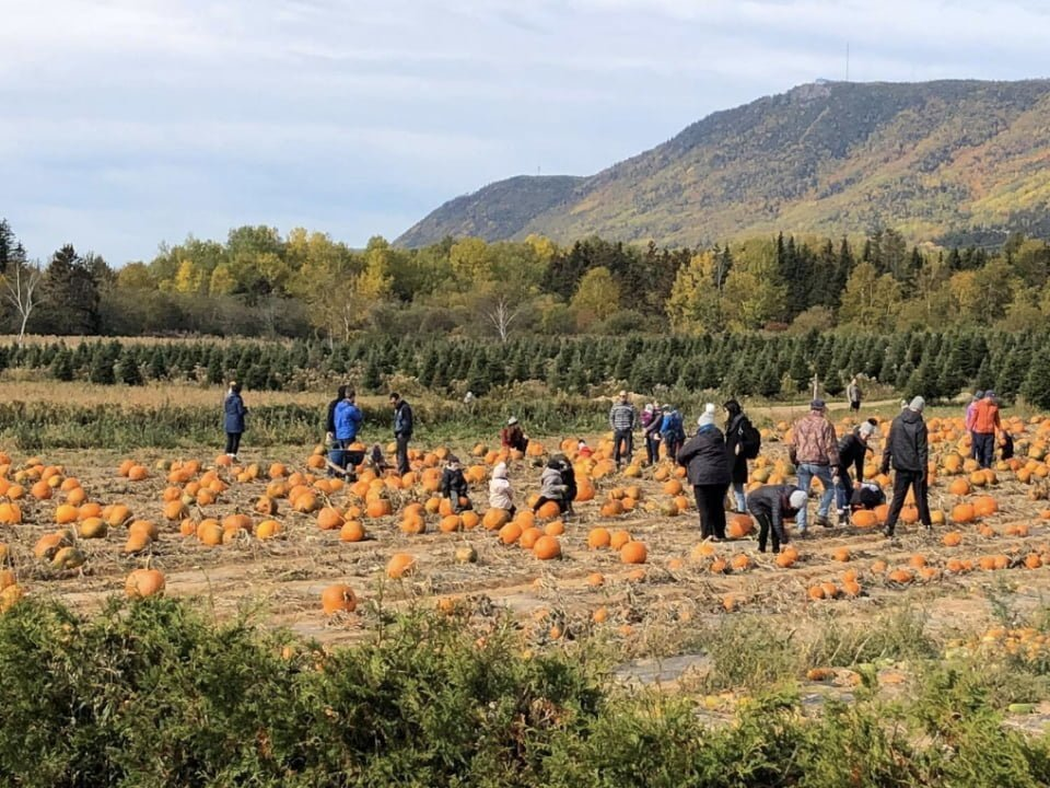 food produce picking les plantations de la baie carleton quebec ulocal local product local purchase