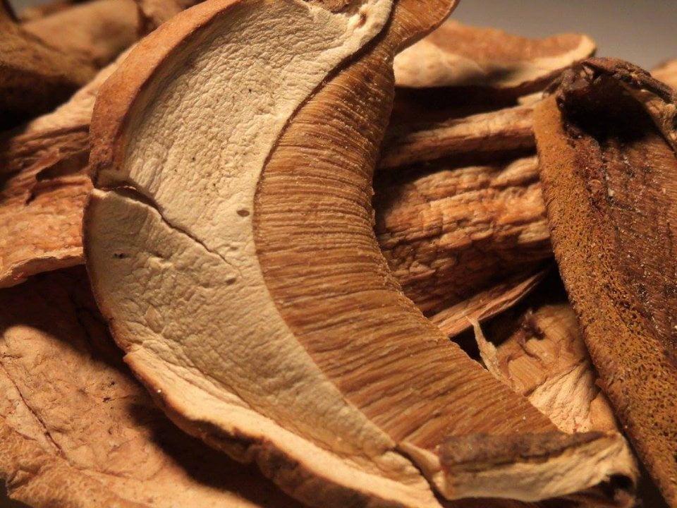 Boutique plantes sauvages naturelles alimentation Trésors Boréals Launay Ulocal produit local achat local