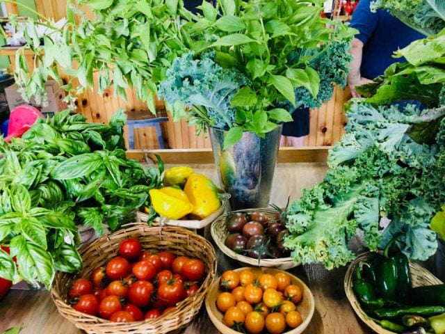 produce picking farm stand with variety of fresh vegetables verger croque-pomme thurso quebec canada ulocal local products local purchase local produce locavore tourist