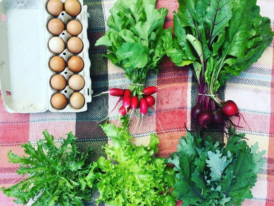 Marché de fruits et légumes zéro déchet écologique Ferme la petite récolte Sawyerville Québec Ulocal produit local achat local