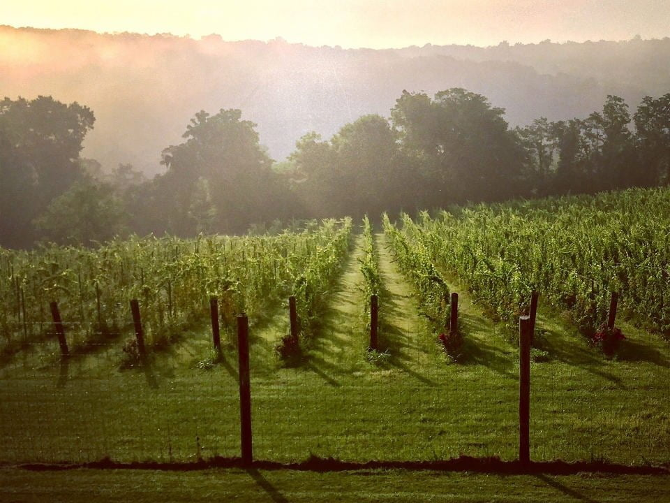 vineyards vines walsh family wines purcellville virginia united states ulocal local products local purchase local produce locavore tourist