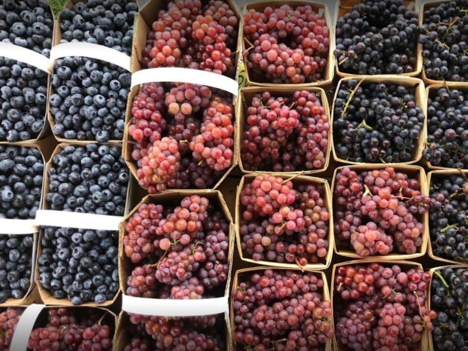 Raisins autocueillette La Fruitière Des Cantons Shefford Québec Ulocal produit local achat local produits du terroir