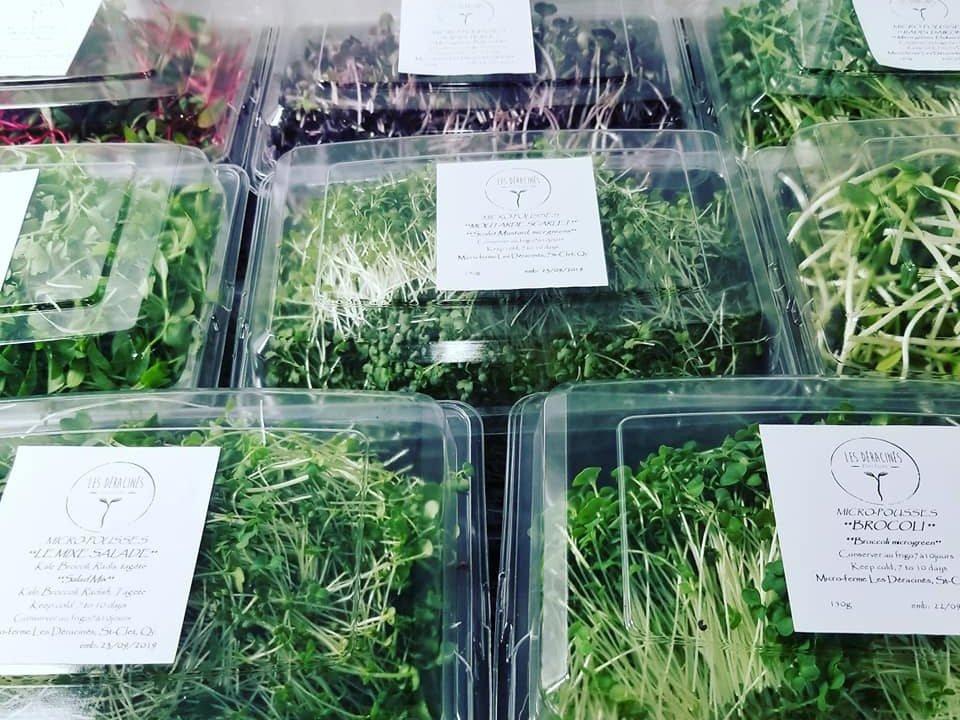 Bio Micro-pousse alimentation Les Déracinés, micro-ferme Saint-Clet Québec Ulocal produit local achat local