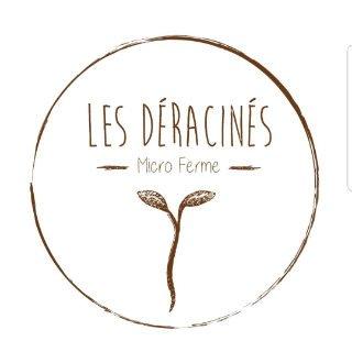 Micro-pousse alimentation Les Déracinés, micro-ferme Saint-Clet Québec Ulocal produit local achat local