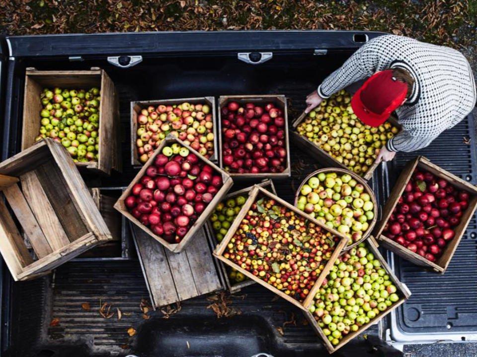 pommes cidre alcool alimentation Cidre Choinière Frelighsburg Québec Ulocal produit local achat local